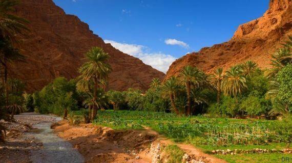 Au Maroc, la plus grande oasis au monde menacée par le changement
