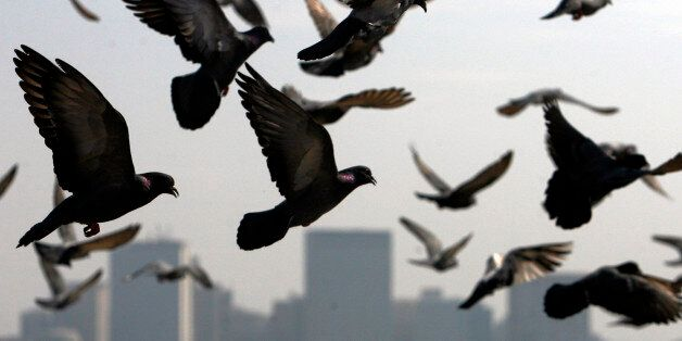 Pigeons fly past the Trident-Oberoi hotel in Mumbai December 7, 2008. REUTERS/Arko Datta