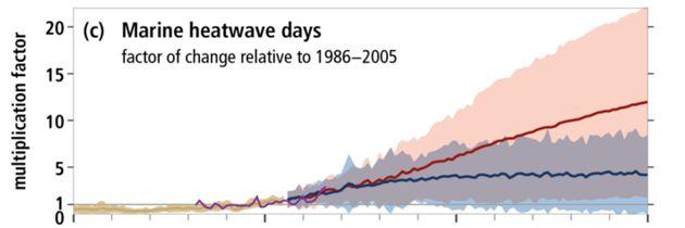 Le nombre de jours de canicules marines, de 1950 à 2100. En rouge, la courbe dans le pire scénario possible....