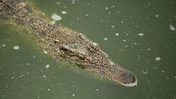 Le fossile d'un petit crocodile de 100 millions d'années retrouvé au