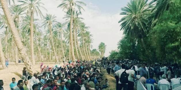 Tunisie-Kébili: Des oasis de dattes au coeur d'un conflit de légitimité entre l'Etat et l