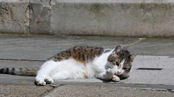 Le sauvetage spectaculaire d'un chat au