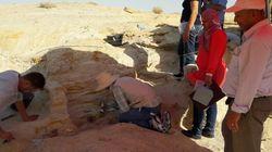 Tunisie: Découverte d'un important site archéologique à