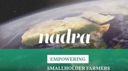 L'OCP lance Nadra Ventures, un fonds dédié aux agriculteurs