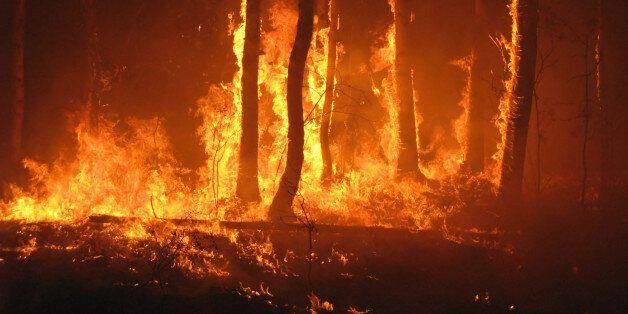 Extinction d'un incendie de forêt ayant ravagé 7 hectares près de