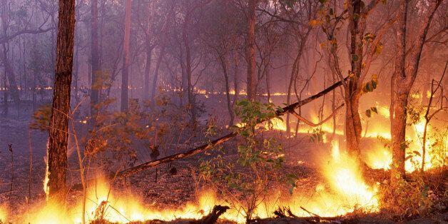 Un feu de forêt se déclare à la province