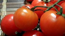 Les légumes marocains ont la cote en Espagne (et dans les autres pays de