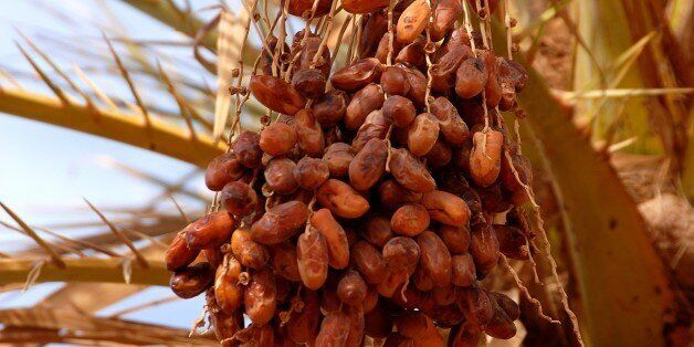 Dates, Mafo, Lybia. (Photo by: Godong/UIG via Getty