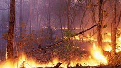 Maroc: Un feu de forêt se déclare à Bab
