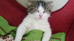 Les chats sont plus mignons... quand ils dorment comme des
