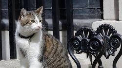 Les chats sont ils malaimés en Tunisie