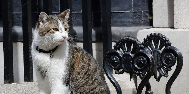 FILE - This is a Wednesday, July 13, 2016 file photo of Larry the Downing Street as he cat sits on the...