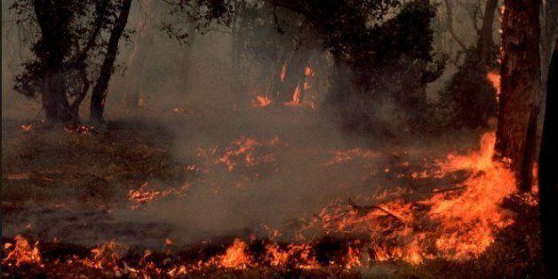Semaine chargée sur le front des incendies au