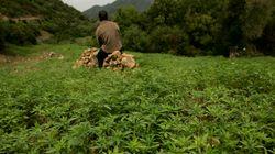 A Chefchaouen, les cultivateurs de cannabis absorberaient l'eau de la