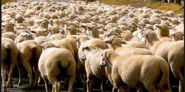 Tunisie: Pourquoi le Syndicat des Imams demande une fatwa pour renoncer au sacrifice de moutons lors...