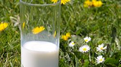 Saisie du lait mélangé à de la lessive ou de la peinture, vendu lors du Ramadan selon le ministère de la