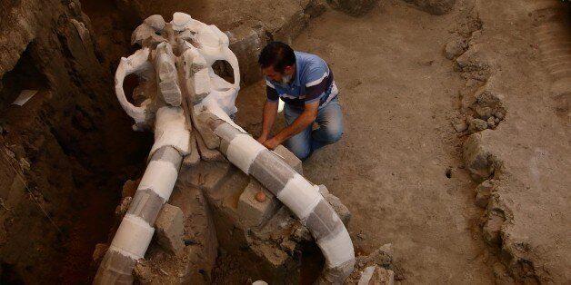 Un mammouth vieux de 14.000 ans sort de terre au Mexique 08:46 - 25/06/16 © AFP L'archéologue mexicain,...