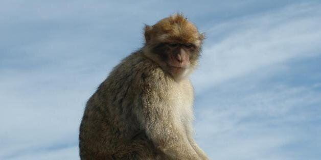 Les touristes doivent (vraiment) arrêter de nourrir les macaques de