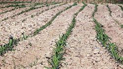La Mamda accélère le paiement des indemnités aux agriculteurs touchés par la