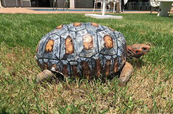 Ils recréent en 3D la carapace d'une tortue qui avait brûlé
