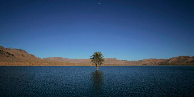 A palm tree grows in the Errachidia reservoir near the Ziz oasis March 7, 2009. When Moroccan rivers...