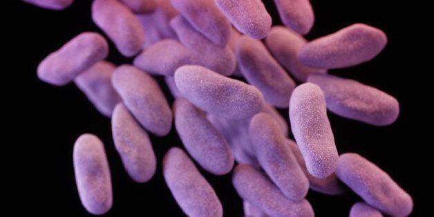 Cette nouvelle super-bactérie signe le début de la fin des