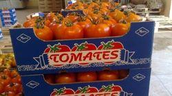 Les producteurs de tomates espagnols en colère contre le