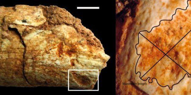 Cet os retrouvé au Maroc prouve que les hommes préhistoriques servaient de repas aux