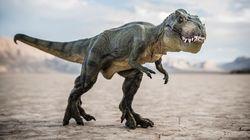 Bien avant la chute de l'astéroïde, les dinosaures étaient déjà en train de