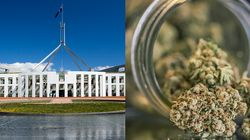 We've Weeded Out The Best Reactions to Canberra Legalising Pot In The