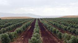 Malgré la sécheresse, la saison agricole n'est pas