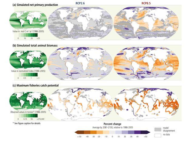 L'évolution des populations marines avec le réchauffement climatique, selon le rapport du Giec sur les...