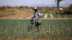 Agriculture: L'État tunisien risque de perdre sa souveraineté