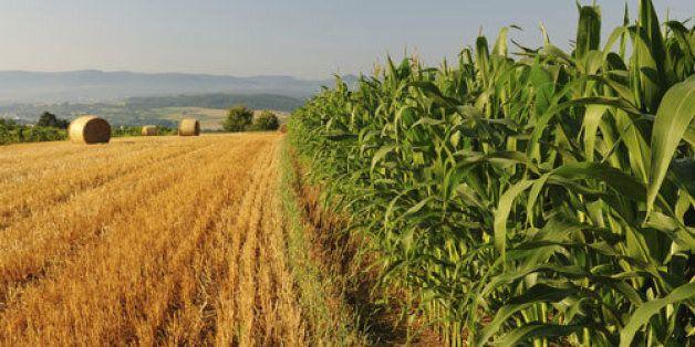 L'assurance agricole de Saham sera sur le marché en
