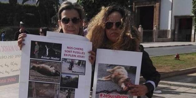 #JesuisBoby, un hashtag pour les chiens errants au