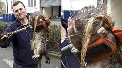 Un «rat géant» retrouvé dans une cour d'école à