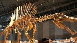 D'importants gisements de dinosaures découverts au