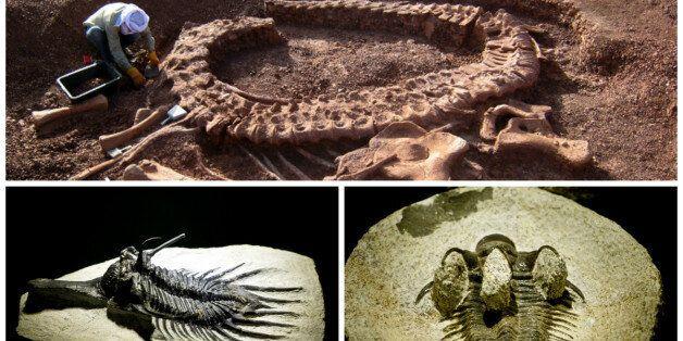 Un fossile marocain pourrait aider à résoudre une énigme vieille de 100