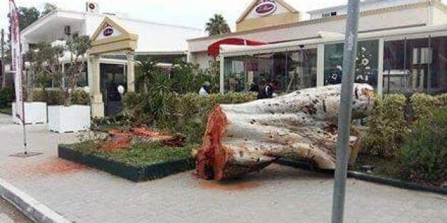 Tunisie: Trois mois de prison ferme pour un commerçant qui a abattu illégalement un eucalyptus