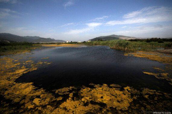 Ain Temouchent: le nombre des zones humides en