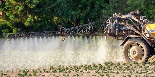 Epandage de pesticides dans un champ de pommes de terre, à Godewaersvelde, dans le Nord de la