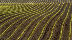 La banque mondiale se penche sur le business de l'agriculture au