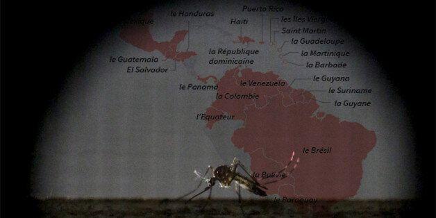 Virus Zika: La Tunisie prend ses dispositions malgré l'absence de cas