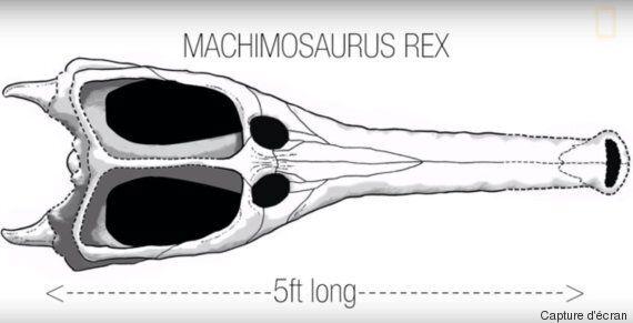 Tunisie: Découverte du Machimosaurus Rex nouveau plus grand crocodile marin