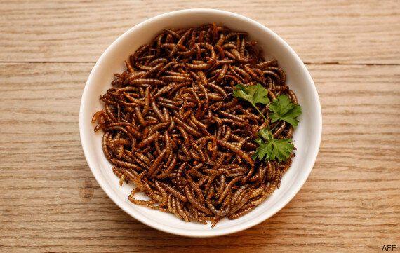 Vers de farine: Il est désormais possible de les élever chez soi pour les manger