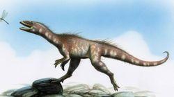 On a découvert un lointain (petit) cousin du T-Rex, et son nom en