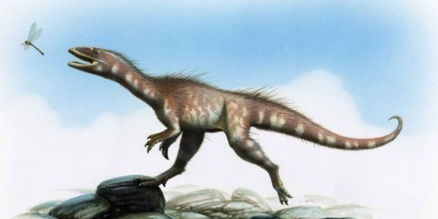 Un nouveau dinosaure, le dracoraptor, découvert au Pays de