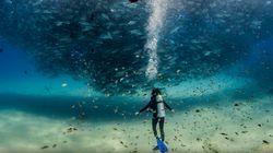 Bilan 2015 : Soyez émerveillés par ces superbes photos du National