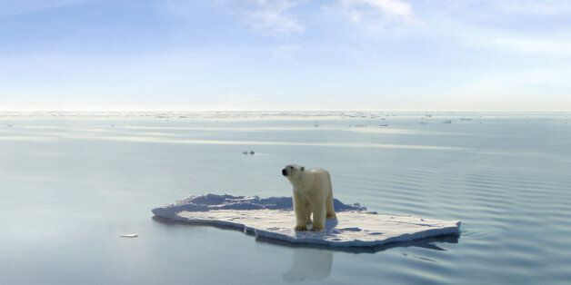 A polar bear managed to get on one of the last ice floes floating in the Arctic sea. Due to global warming...