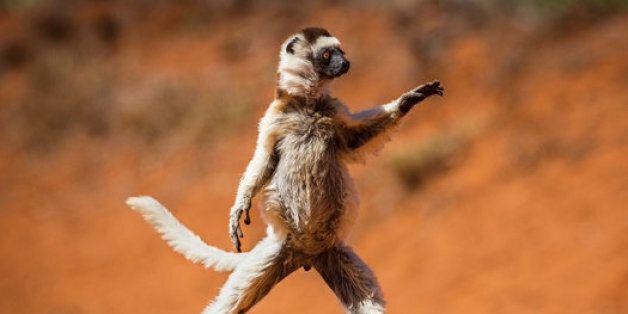 Le classement des photos d'animaux les plus drôles